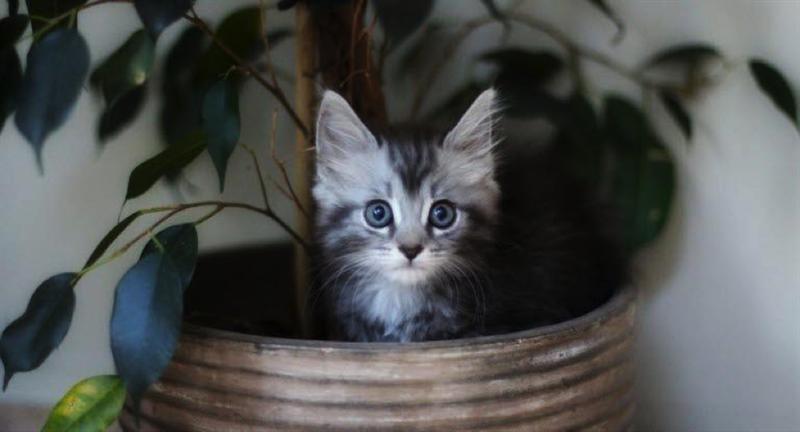 24.02.2021: Ny undersøgelse – Liv eller død for katte | DYRLÆGEN